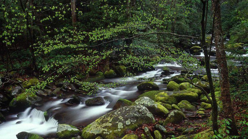 「ロアリング・フォーク」米国テネシー州, グレート・スモーキー山脈国立公園
