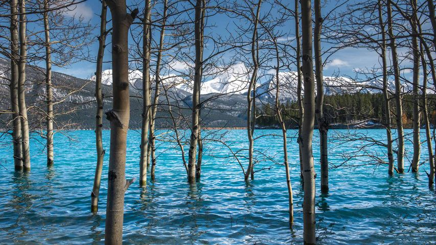 「アブラハム湖」カナダ, アルバータ州