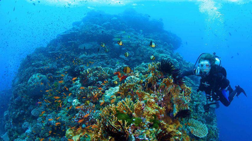 「シルビア・アール博士の海中探索」オーストラリア, グレート・バリア・リーフ