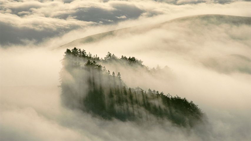 「海岸沿いのセコイア」米国カリフォルニア州, ヘンリー・コウェル・レッドウッド州立公園