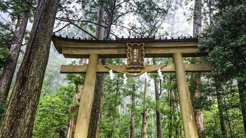 「飛瀧神社」和歌山, 熊野古道