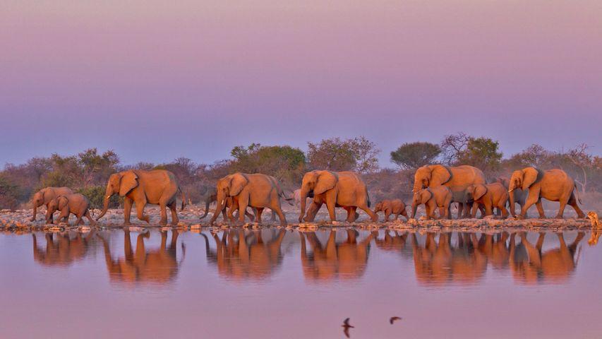 「ゾウの群れ」南アフリカ共和国, クルーガー国立公園