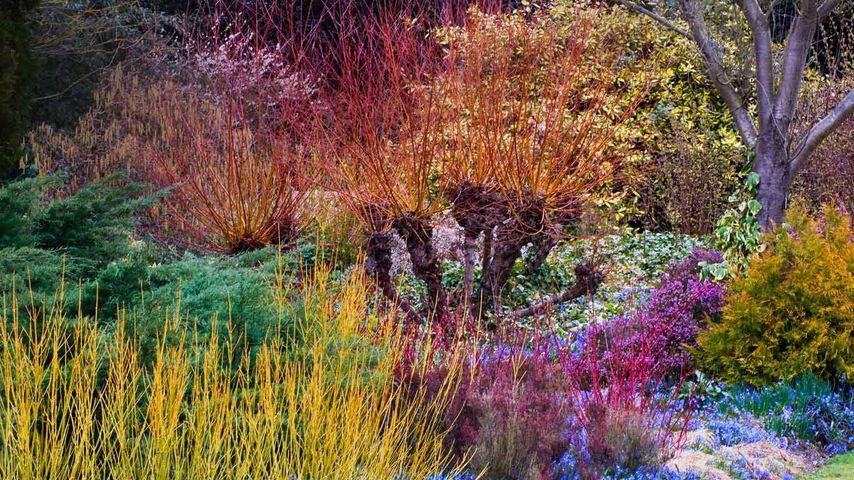 「ケンブリッジ大学付属植物園」イギリス, ケンブリッジ