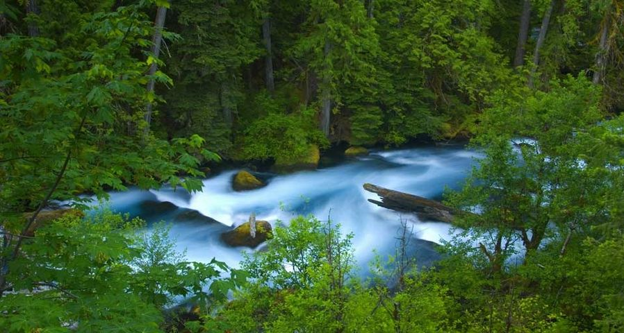 「マッケンジー川」アメリカ, オレゴン州, ウィラメット国有林