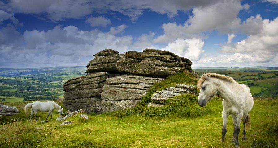 「ポニーの放牧」イギリス, ダートムーア - Adam Burton/Photolibrary ©