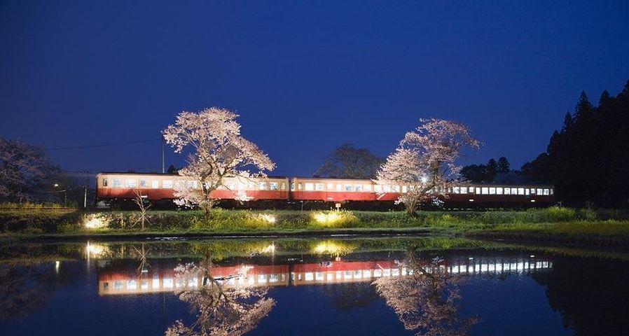 「小湊鉄道と桜」千葉, 市原, 飯給駅