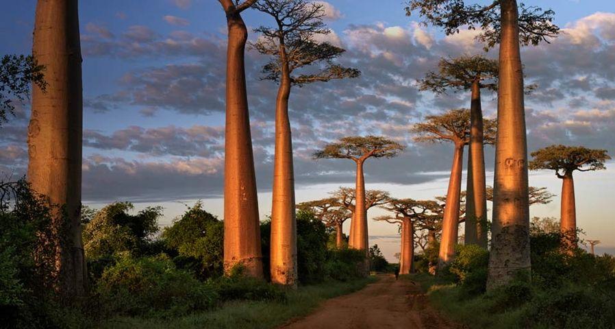 「バオバブの並木道」マダガスカル