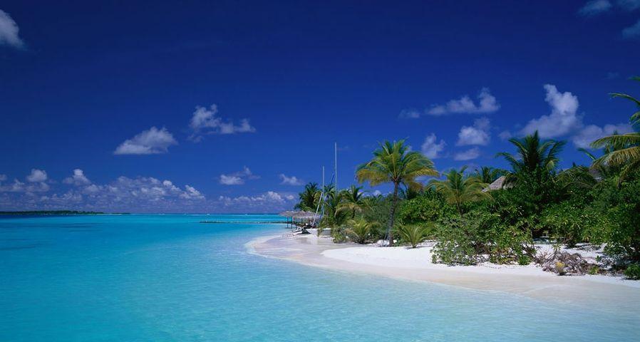 「ヤシの木の浜辺 」モルディブ, アリ環礁