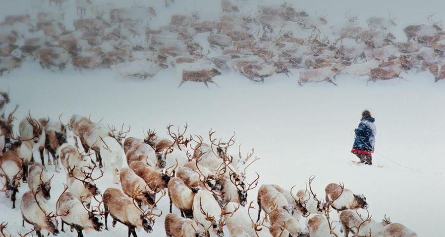 「トナカイの牧畜」ロシア, シベリア