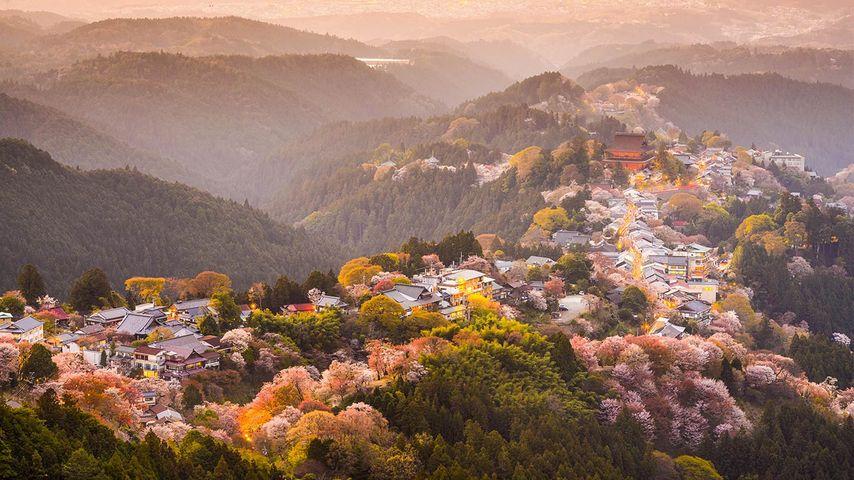 「吉野の桜」奈良, 吉野山