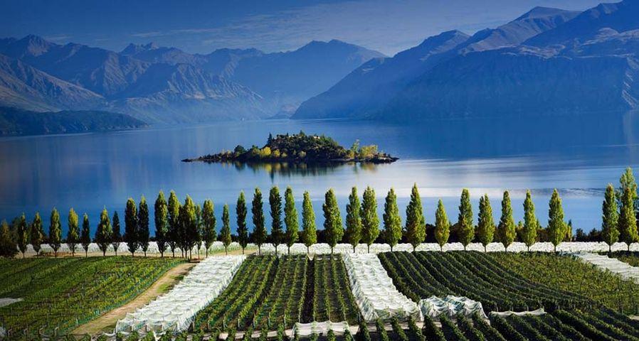 「ワナカ湖のワイン園」ニュージーランド, ワナ