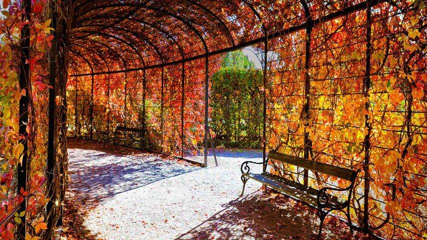 「シェーンブルン宮殿の紅葉」オーストリア, ウィーン