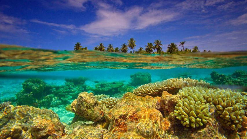 「サンゴ礁」モルディブ共和国, ガーフ・ダール環礁