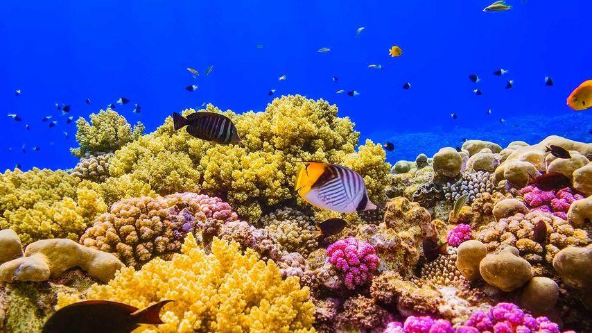 「紅海のサンゴ礁」エジプト