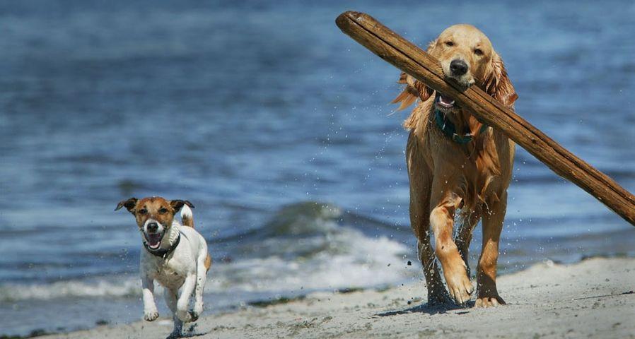 「流木を運ぶ犬」