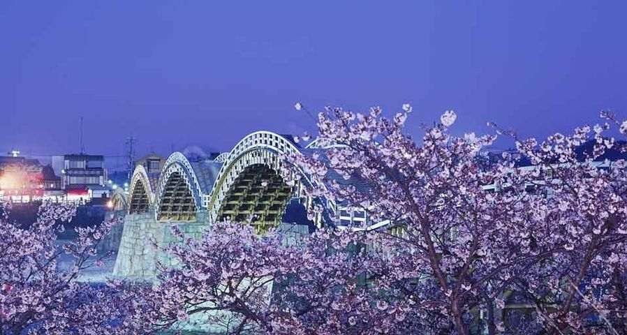 「錦帯橋と桜」山口, 岩国