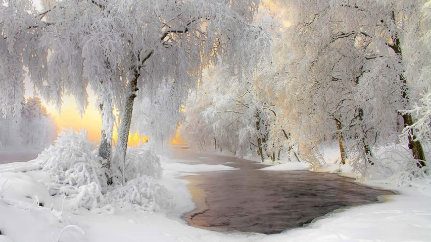 「冬の森」フィンランド, クフモ