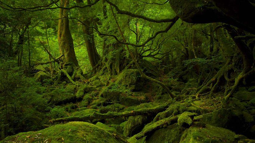 「白谷雲水峡」鹿児島, 屋久島
