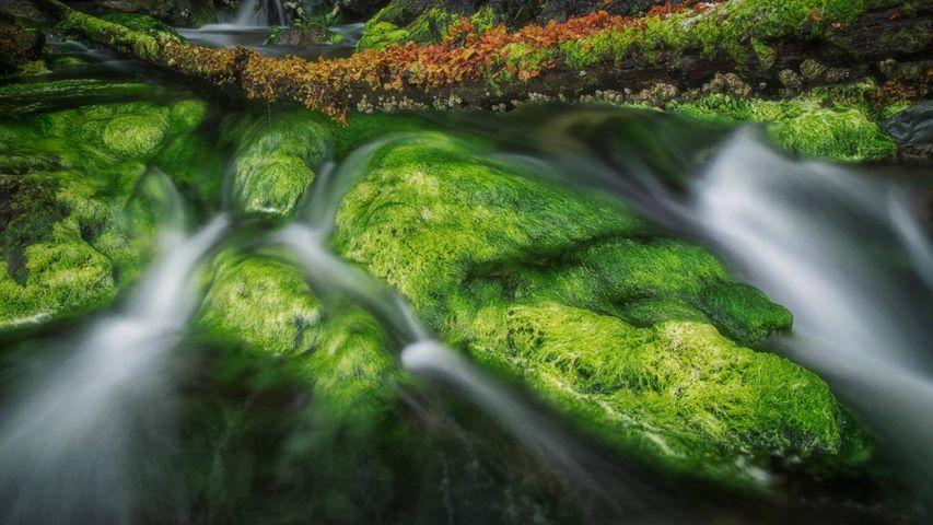 「グアイ・ハアナス国立公園の清流」カナダ, ブリティッシュコロンビア州