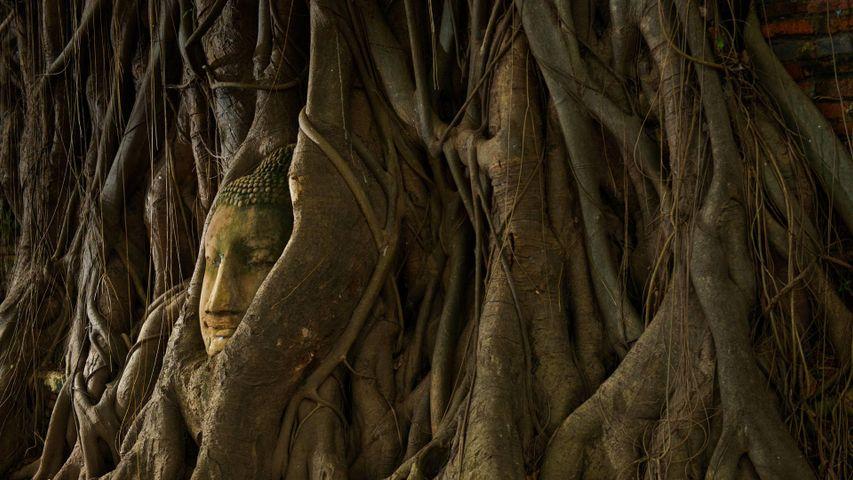 「ワット・マハータートの仏頭」タイ, アユタヤ
