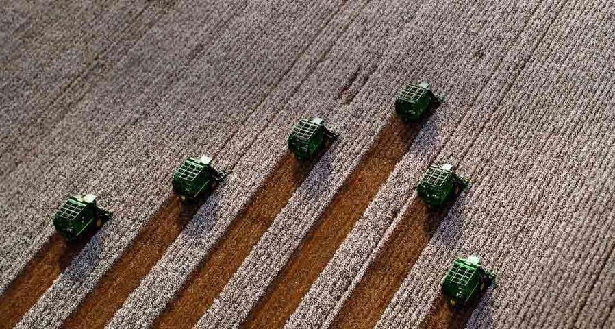 「綿花の収穫」コスタリカ