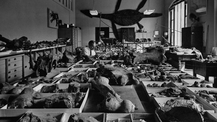 「スミソニアン博物館のバックヤード」米国, ワシントンD.C.