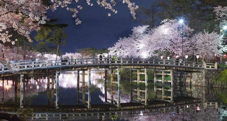 「極楽橋と桜」新潟, 上越市