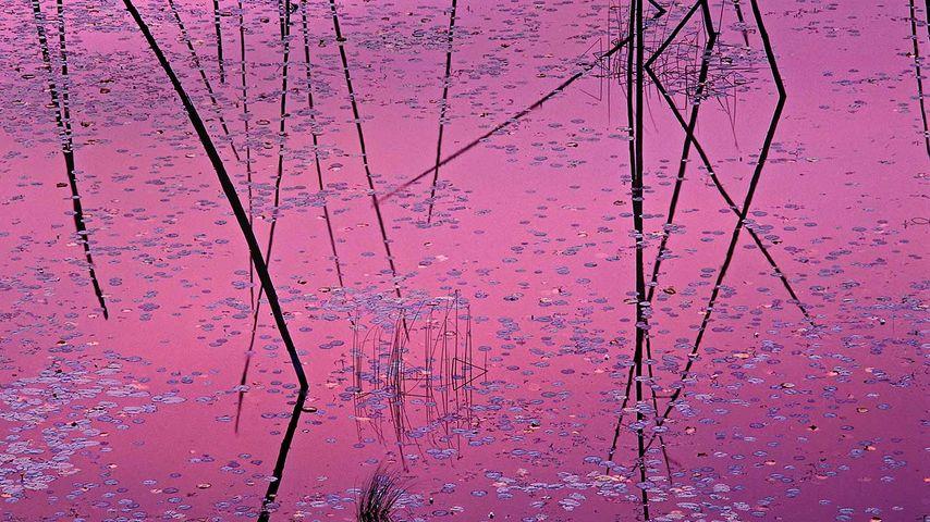 「湖面に映る夕陽」アメリカ, ミネソタ州