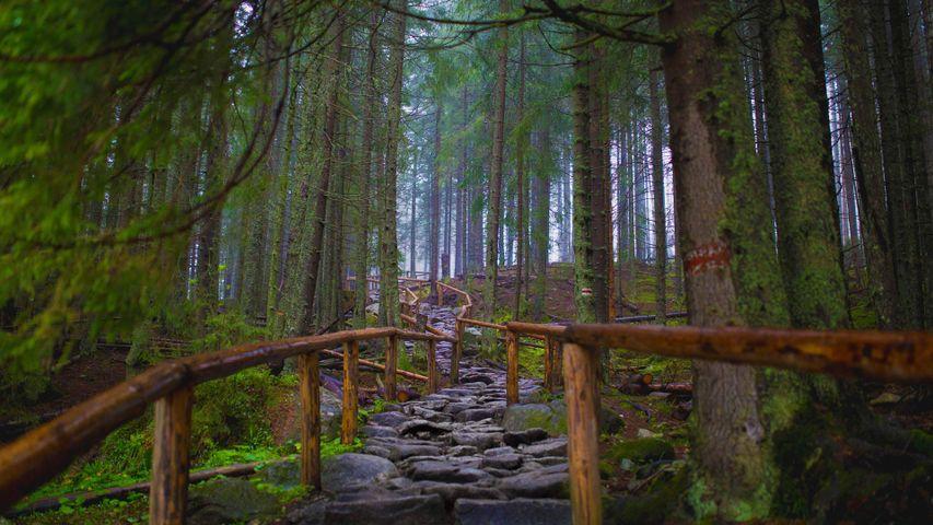「モルスキ・オコへの小径」ポーランド, タトラ国立公園