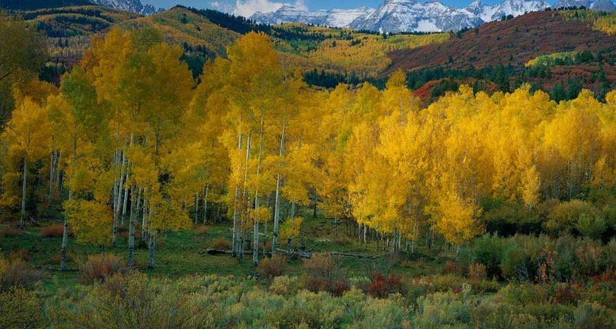 「アンコンパーグレ国有林」アメリカ, コロラド州, サンファン郡, ダラス・クリーク