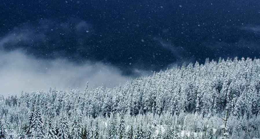 「スコーミッシュの森」カナダ, ブリティッシュコロンビア州