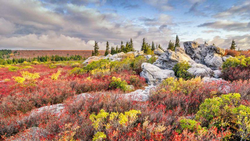 「ベアロックス自然保護区」米国ウェストバージニア州
