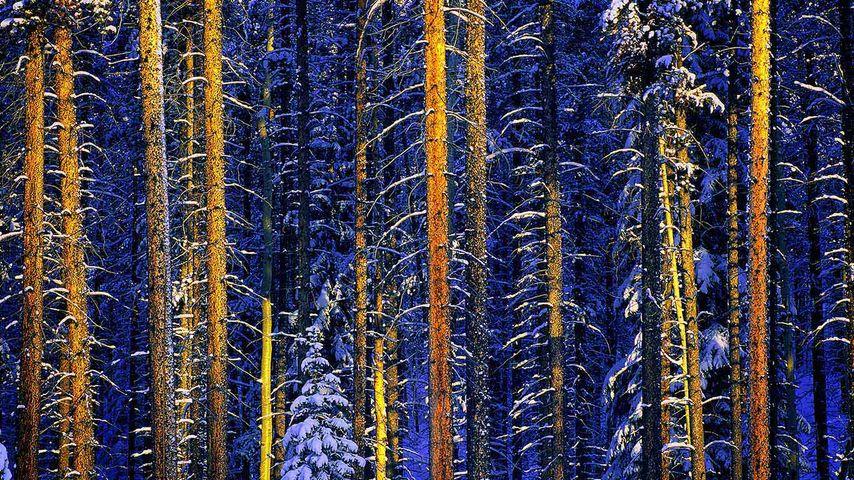 「ジャスパー国立公園」カナダ, アルバータ州