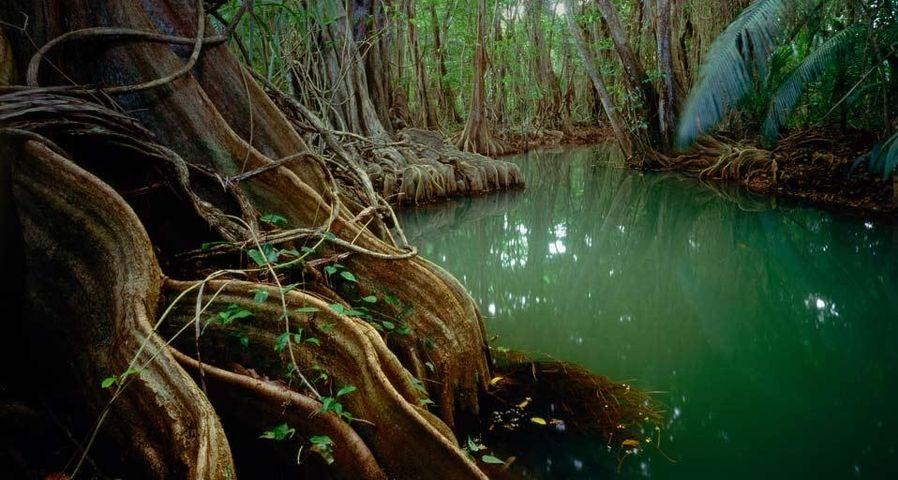 「マリゴの森」ドミニカ国