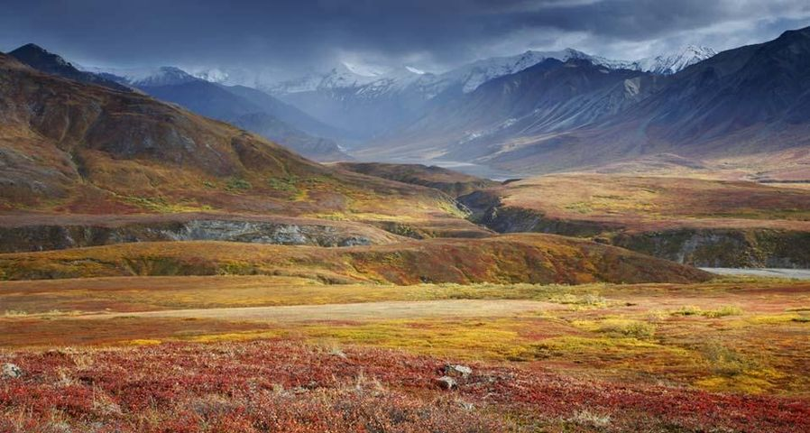 「デナリ国立公園」アメリカ, アラスカ
