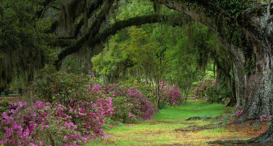 「樫の木の小路」アメリカ, サウスカロライナ州