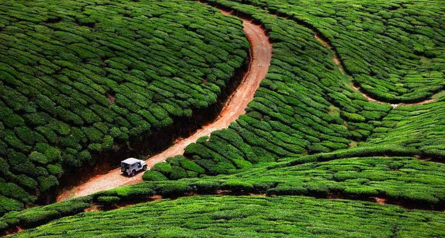 「ケーララの茶畑」南インド