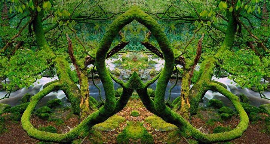 「キラーニー国立公園」アイルランド