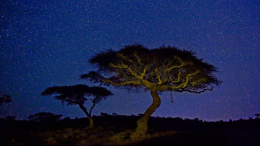 「アカシアと星空」ケニア, レワ野生動物保護管理公園