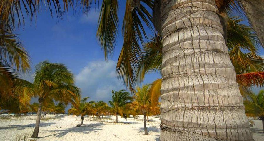 「カヨ・ラルゴ島」キューバ