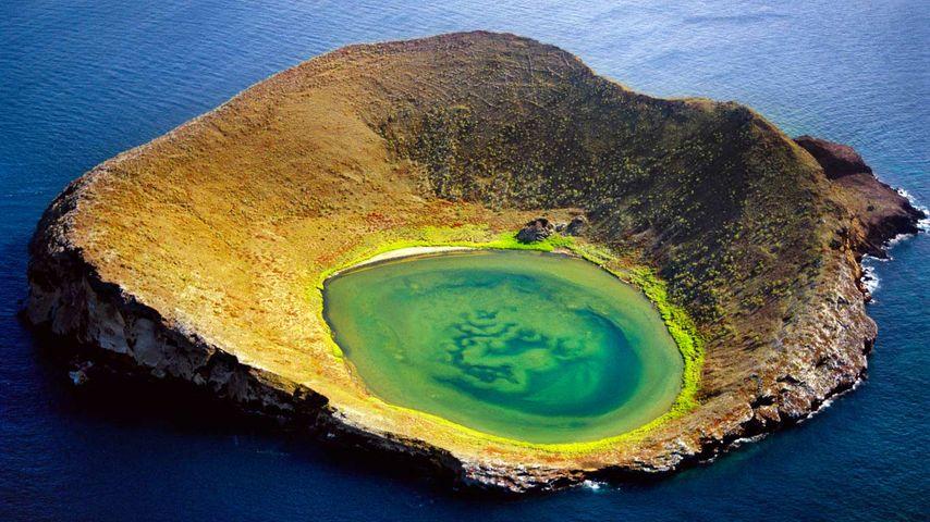 「ベインブリッジ・ロックス」エクアドル, ガラパゴス諸島