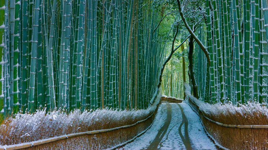 「嵯峨野」京都, 嵐山