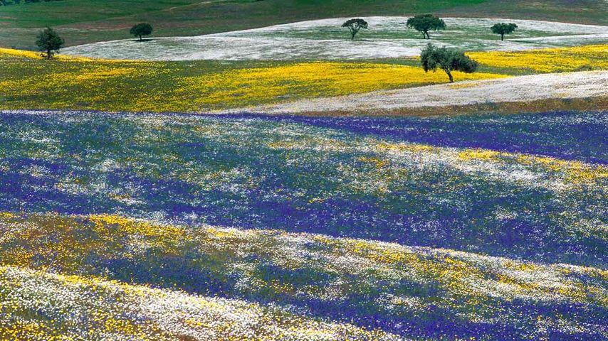 「アレンテージョの花畑」ポルトガル