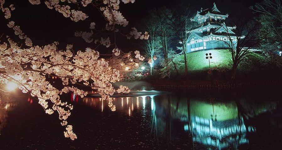 「高田城の夜桜」新潟, 上越市