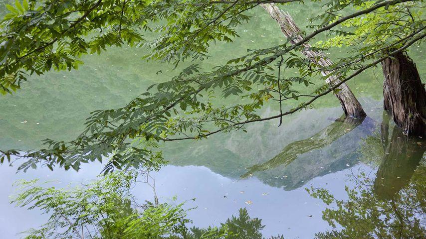 「鶏頭場の池」青森, 白神山地