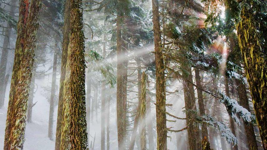 「ベーカー山スノコルミー国立森林公園」アメリカ, ワシントン州