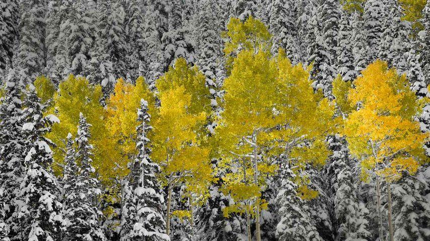 「サンファン山脈の黄葉」アメリカ, コロラド州