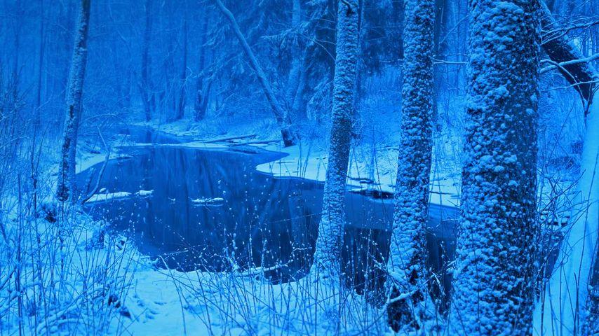 「ビャウォヴィエジャの森」ポーランド