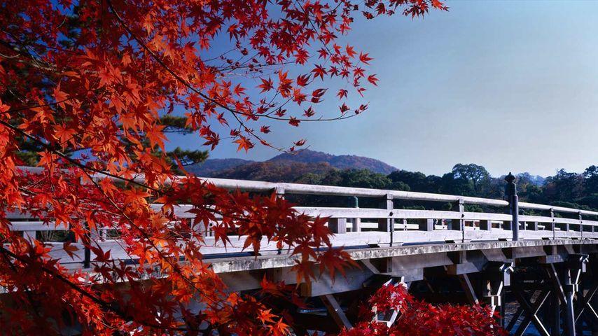 「秋の宇治橋」三重県, 伊勢神宮