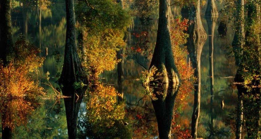 「池に映る糸杉」アメリカ, デラウェア州